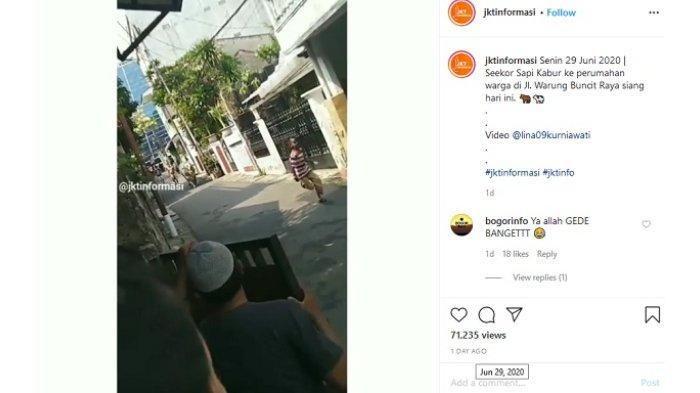 Viral Video Detik-detik Sapi Jumbo Lepas ke Pemukiman, Warga Lari Tunggang Langgang karena Dikejar