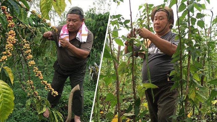 Sosok Susno Duadji, Mantan Kabareskrim Polri yang Kini Tekun Bertani di Kampung Halaman