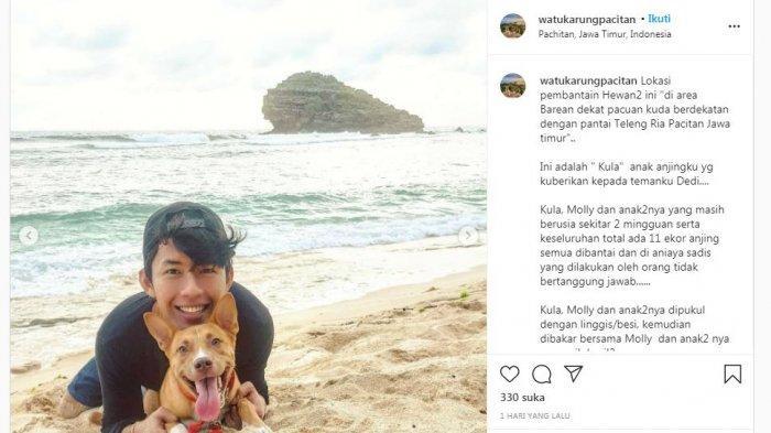 Unggahan akun @watukarungpacitan yang mengisahkan tentang pembantaian anjing-anjing di sekitar Pantai Teleng Ria, Pacitan, Jawa Timur.