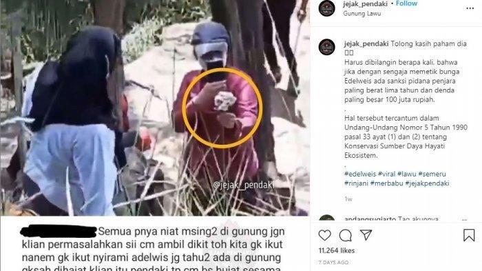 Fakta Viral Pendaki Wanita Berfoto Sambil Pegang Bunga Edelweis di Gunung Lawu, Ini Kronologinya