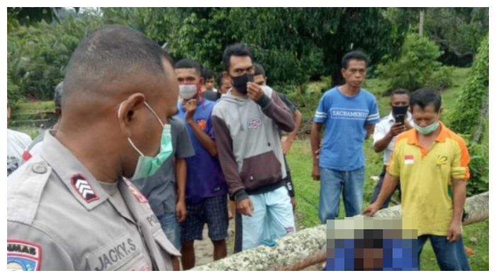 Tengah Melintas seusai Antar Penumpang, Tukang Ojek di Maluku Tengah Tertimpa Pohon yang Ambruk