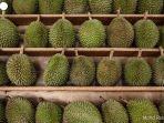 durian-jsdjdjsndks.jpg
