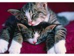 kucing_20170516_074146.jpg