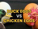 telur-bebek-dan-telur-ayam.jpg