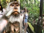 wisatawan-saat-sedang-melakukan-monkey-seflie.jpg
